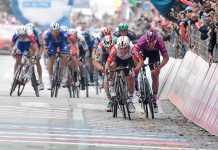 Caleb Ewan Giro de Italia et. 8 (Ph2. Giro d'Italia) Escarabajos colombianos
